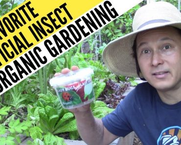 My Favorite Beneficial Insect for Organic Gardening that Eats Everything