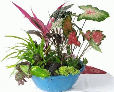 Basket Garden /Garden Decoration/ORGANIC GARDEN