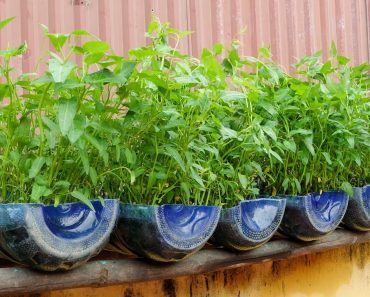 Brilliant idea | How to grow Water Spinach from Cuttings for Beginners