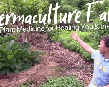 Permaculture Farmacy Grows Plant Medicine that Heal You & The Planet | The Future of Farming