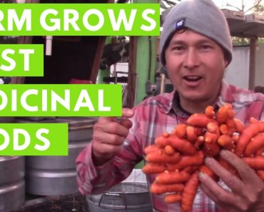 Farm Grows Most Medicinal Foods that Helped Heal Farmer from Cancer