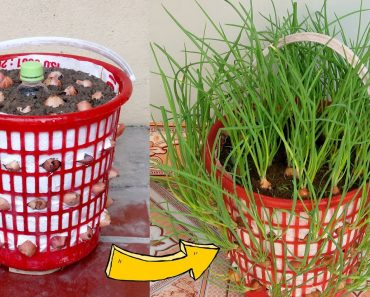 Amazing ideas | How To Grow Green Onions At Home from Recycling Laundry Basket