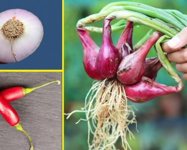 GROW VEGETABLES AT HOME FROM KITCHEN SCRAPS EASILY!
