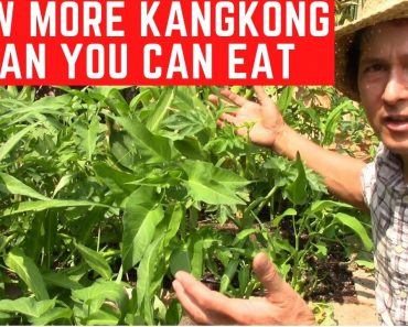 How to Grow More KangKong  than You Can Eat in Soil | Water Spinach