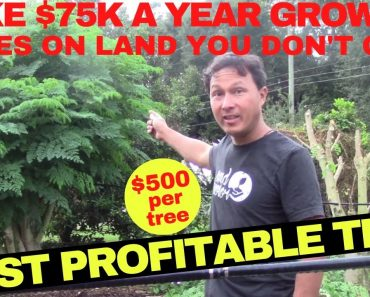 Make $75,000 Growing this Cash Crop Tree without Owning Farm Land