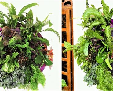 How to make An Indoor living  Plant Wall/ Planter Idea/Wall Frame Planter/ORGANIC GARDEN