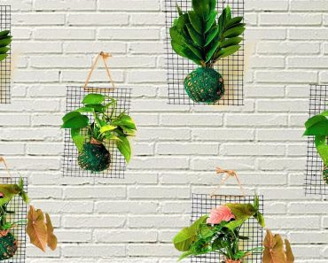How To Make An Indoor Plant Living Wall/Plants  Hanging Ball/Plants Hanging Ideas/ORGANIC GARDEN