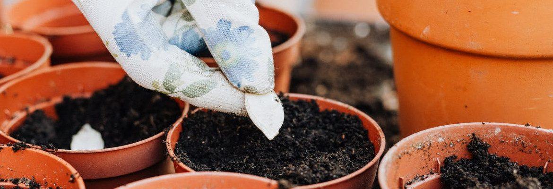 learn organic gardening2