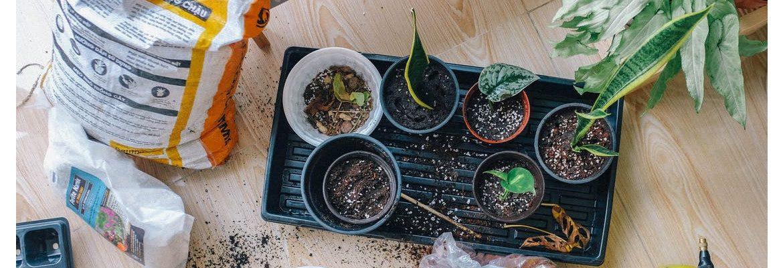 learn organic gardening3