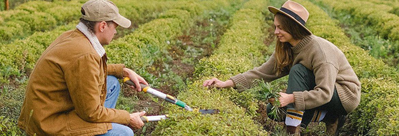 learn organic gardening6