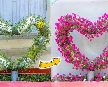 Beautiful Heart Shape Portulaca Grandiflora Flower Vertical Garden
