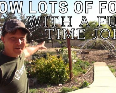 Best Tips to Grow Lots of Food Despite Summer Heat & a Full Time Job