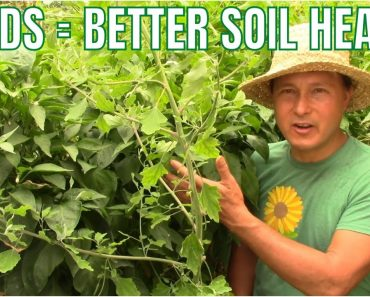 Grow Weeds with Vegetables for Better Garden Soil Health