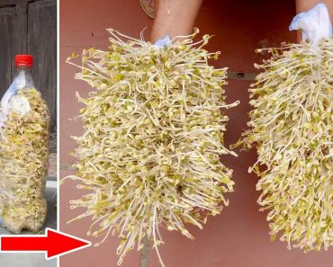 How to Grow Bean Sprouts at Home, Grow Sprouts in Plastic Bottles