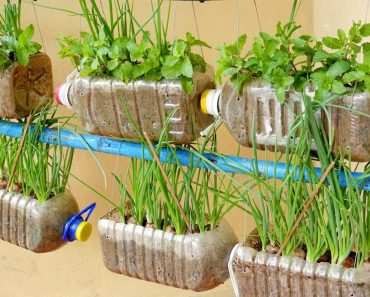 Amazing Idea | Growing Onions and Mint in Plastic Bottles at Home, Hanging Garden