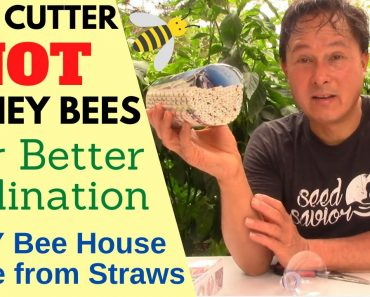 Leaf Cutter Not Honey Bees Are Better Pollinators + Cheap Home DIY