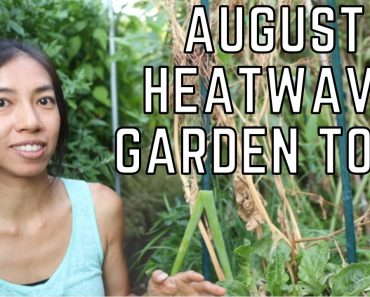 My Plants Survived the August Heat Wave Vegetable Garden Tour