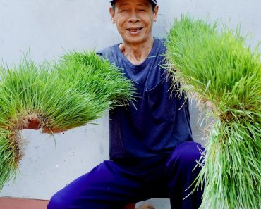 Brilliant Idea | How to grow Wheatgrass without soil at Home | Easy for Beginners