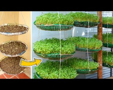 Brilliant Idea | Recycling FAN Cages into Smart Vertical Garden For Small Spaces