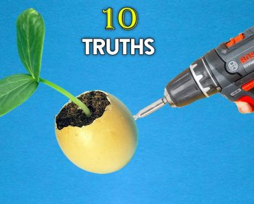 10 TRUTHS ABOUT EGGSHELLS IN GARDEN | HOW NOT TO USE THEM FOR FLOWERING & TOMATO PLANTS ?