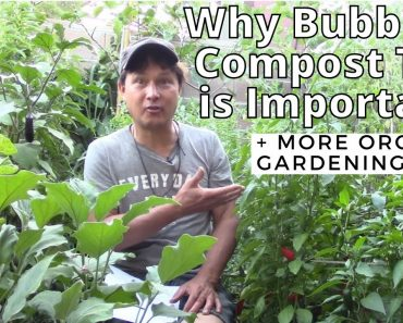 Why It's Important  to Bubble/Aerate Compost Tea + More Gardening Q&A