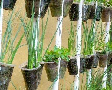 Recycling Plastic Cups into Hanging Vegetable Garden | Hanging Garden Ideas